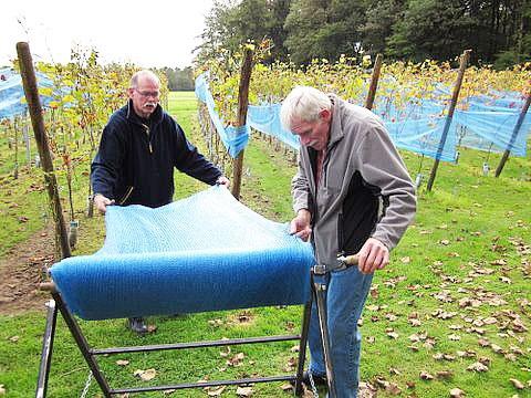 vrijwilligers aan het werk bij wijngaard de zessprong
