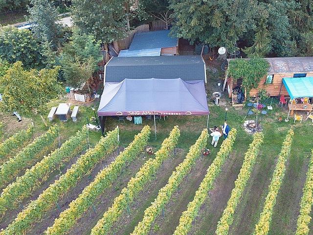 Met drone gemaakt overzicht wijngaard