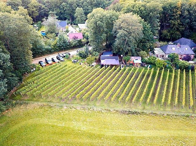 Overzicht wijngaard met Drone gemaakt