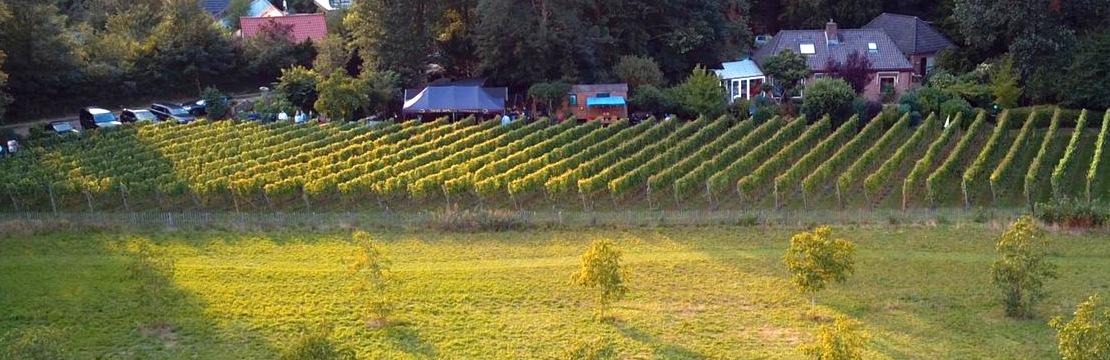 wijngaard de Zessprong